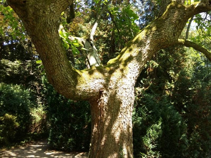 Baum beim Waldbaden